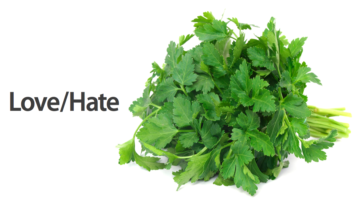 Click here to read Is Cilantro Hating Genetic?