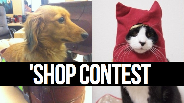 Shoppin' Cats and Dogs