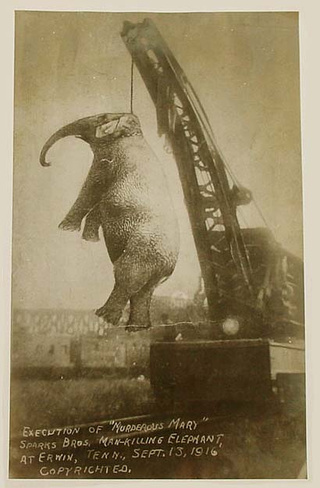 In 1916, a circus in Tennessee sentenced an elephant to death by hanging
