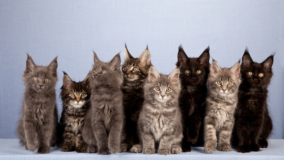 Husband Leaves Wife Because Her 550 Cats Kept Stealing His Food
