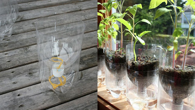 Turn a Soda Bottle into a Worry-Free Self-Watering Planter