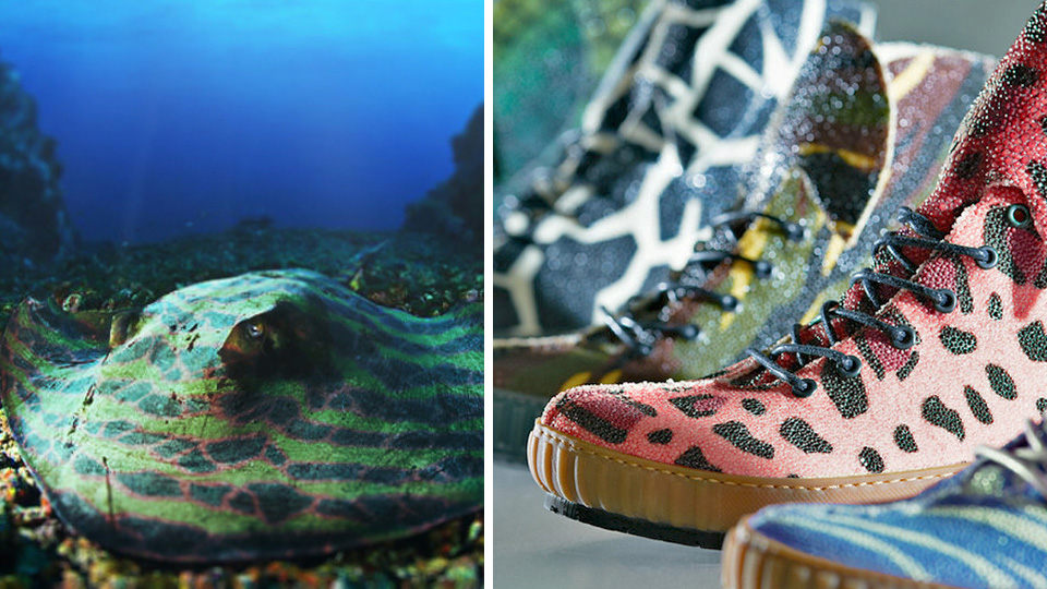 Click here to read $1800 Gets You Sneakers Made From Stingrays Customized Through Genetic Engineering