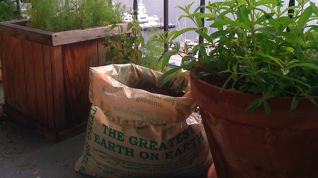 Click here to read Grow Your Own Potatoes Anywhere with a Sack and Some Soil