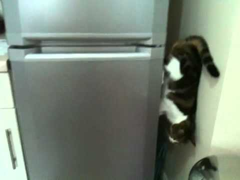 Click here to read You Won't Believe How This Cat Walks Down This Fridge