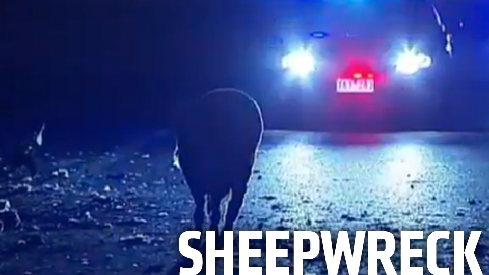 Click here to read Overturned Truck Dumps 400 Sheep Off Overpass