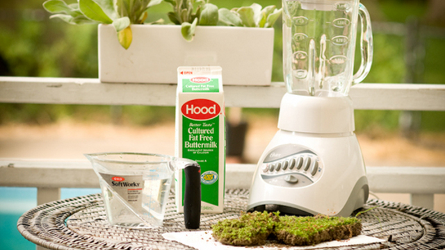 Click here to read Grow Moss Anywhere