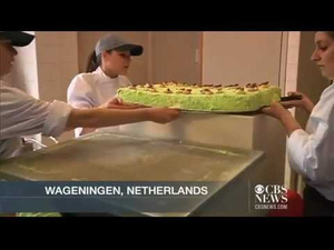 This Huge Cake Is Made of Grasshoppers and It Looks Disgustingly Delicious
