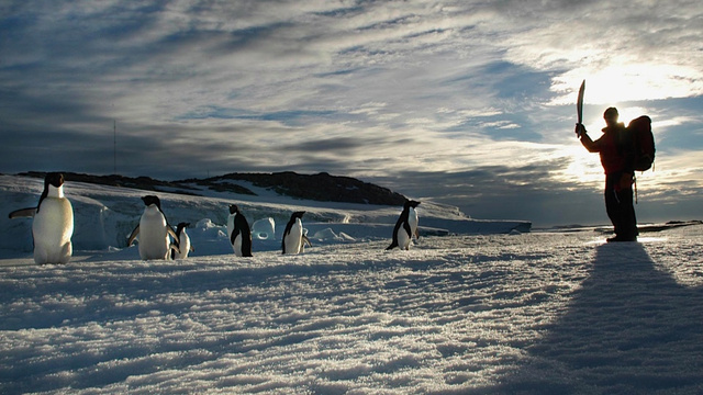 The Sexual Depravity of Adelie Penguins Is One of Science's Dirtiest Secrets