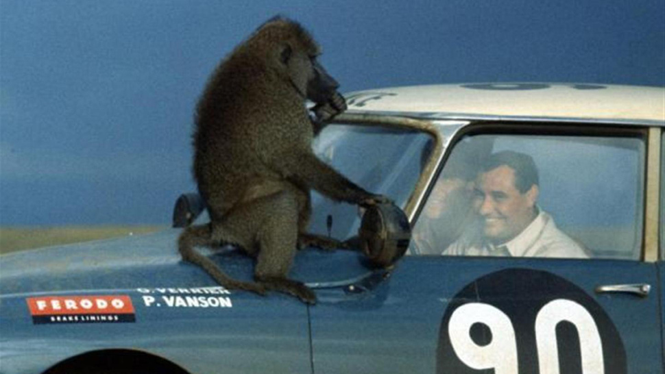 The Ten Strangest Animal-Automobile Interactions