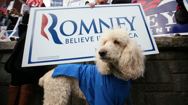 Activists Will Tailgate Mittens Romney's Campaign Bus With A Stuffed Dog On The Roof Of Their Car