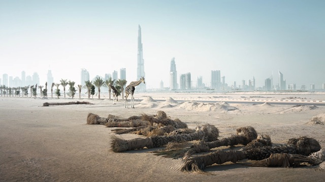 Photos of animals wandering a post-human Dubai
