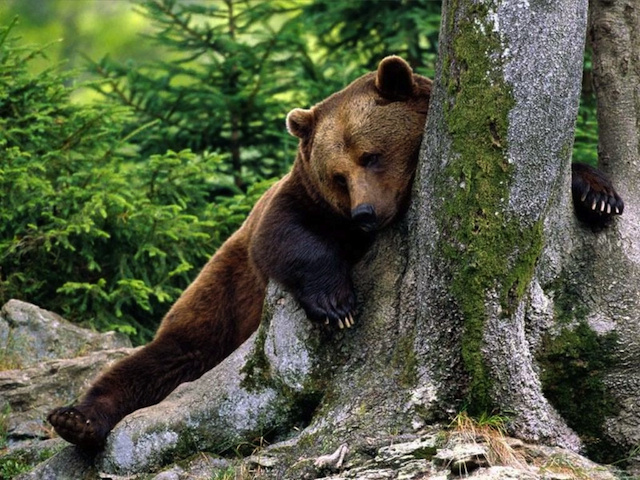 Ukraine Solves Its Alcoholic Bear Problem Just In Time For Euro 2012 (Also, Ukraine Had A Problem With Alcoholic Bears)