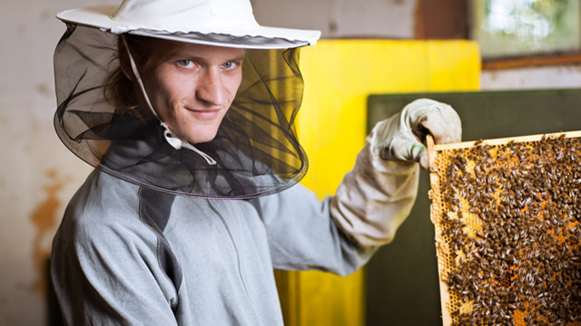 Fresh Summer Hell for New York City: A Plague of Bees