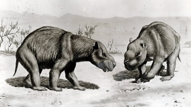 Scientists find a mass grave of extinct 'mega-wombats' in Australia