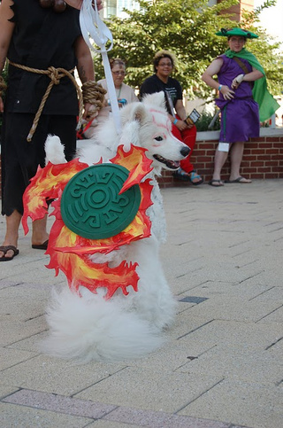 Meet a Dog That's Blissfully Unaware He's Cosplaying Amaterasu