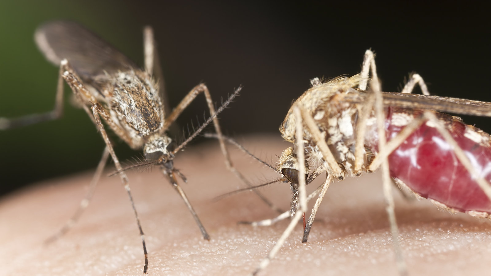 Click here to read How to Keep Mosquitoes Out of Your Yard