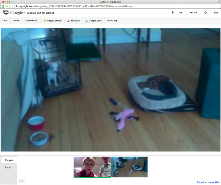Use Google  Hang Outs To Create Your Own Personal Puppy Cam
