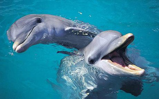 Will we ever learn to speak dolphin?
