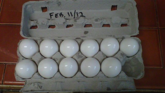 Click here to read Coat Eggs in Mineral Oil to Keep Them Fresh Longer