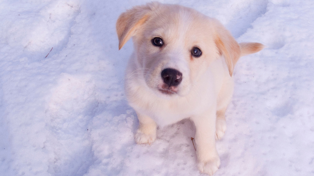 Click here to read How to Choose a Secure Pet Name
