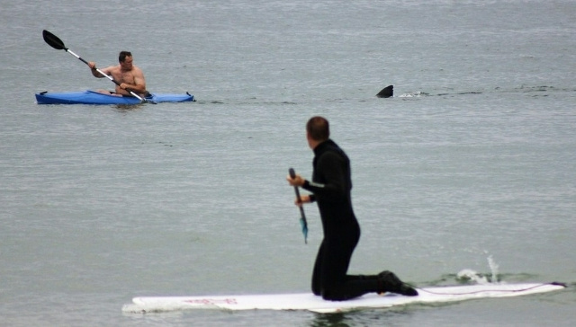 Kayaker's Jaws-Like Run-In with Shark Not Enough to Keep Cape Cod Beach Closed