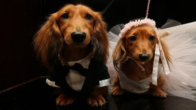 Two Dogs Marry in NYC, Possibly Confirming the Worst Suspicions of Anti-Gay Marriage Activists Everywhere