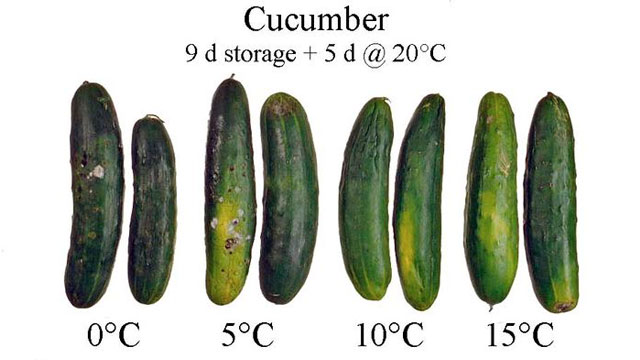 Click here to read Store Cucumbers at Room Temperature So They'll Last Longer