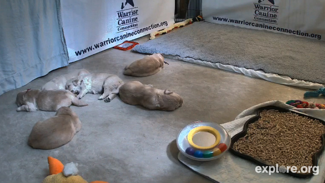 Watch Puppies Be Asleep and Other Things on This PuppyCam