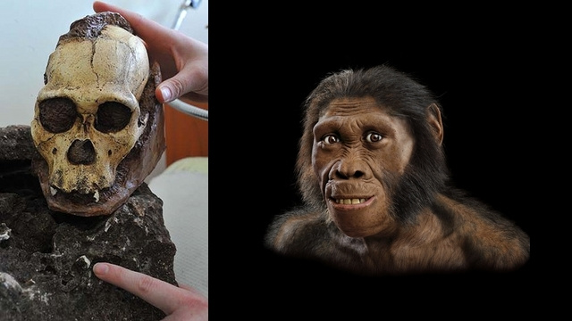 Scientists uncover the oldest complete human ancestor skeleton yet found