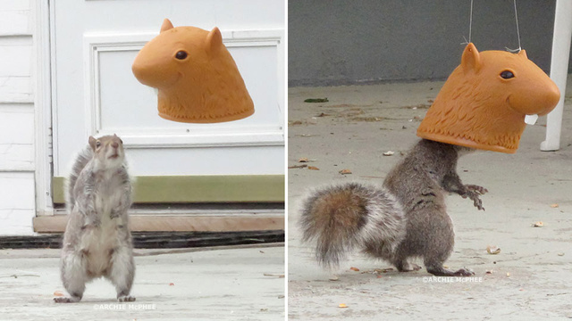 Humiliate Your Backyard Pests With This Giant Head Squirrel Feeder