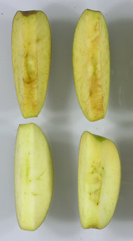 Genetically modified apples won't turn brown when you slice them