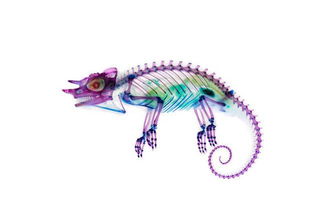 These psychedelic animal specimens are unlike anything you've ever seen