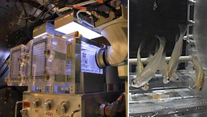 The Space Station's New Aquarium Prepares Astronauts For a Puppy Some Day