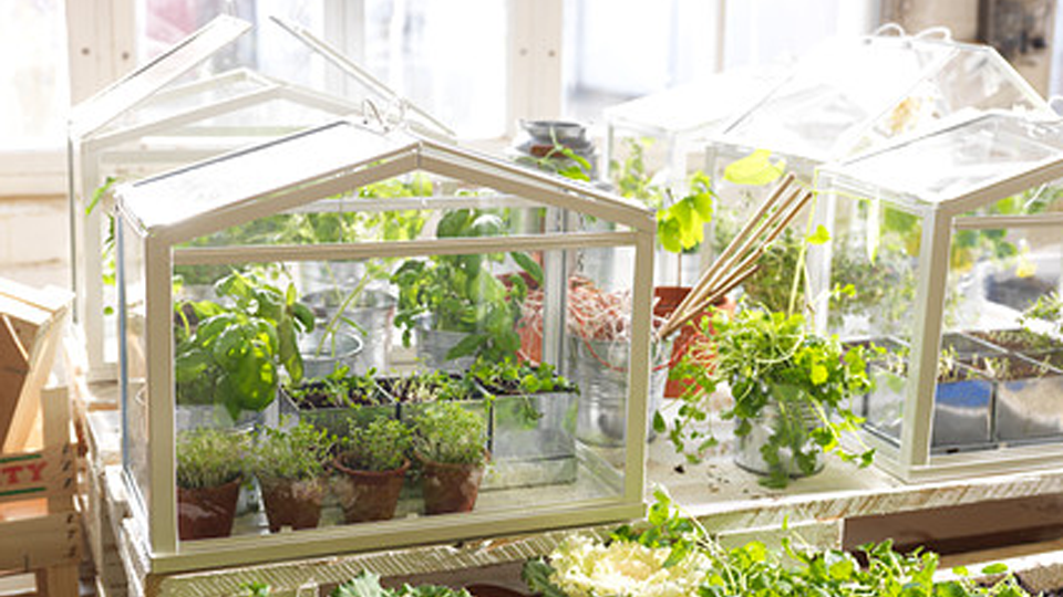 Click here to read Grow a Tiny Garden in a Tiny Ikea Greenhouse