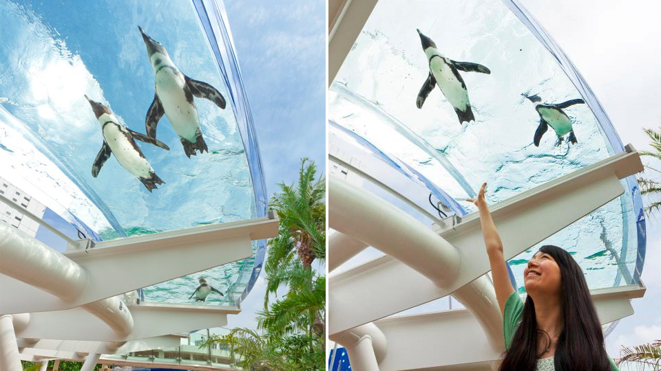 Click here to read This Aquarium Is the Only Place On Earth Where Penguins Can Fly