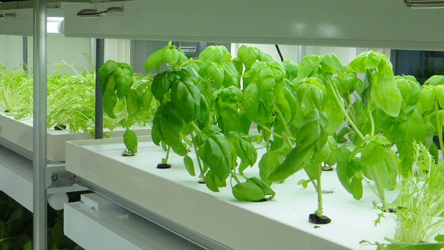Compact Hydroponics Cube Turns an Extra Parking Spot Into a Vegetable Farm