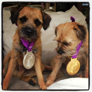 Here Are Andy Murray's Adorable Puppies Wearing His Olympic Medals, Because Puppies