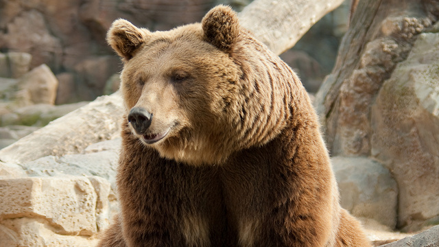 Drunk Bear Family Downs Over 100 Beers During Bear Rager