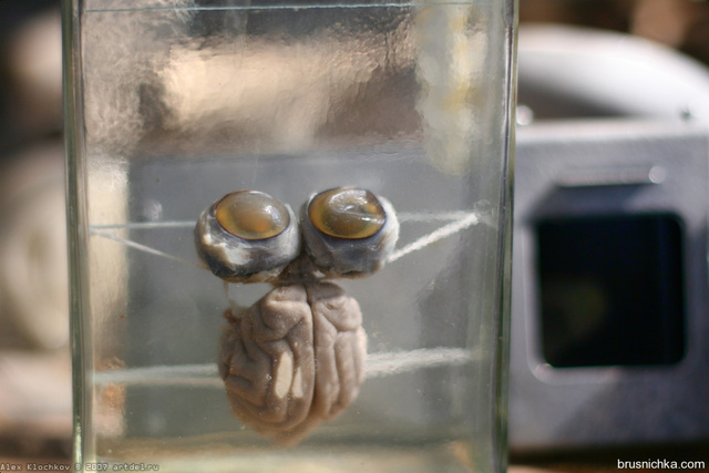 Brains in jars still remain in this abandoned Russian neuroscience laboratory