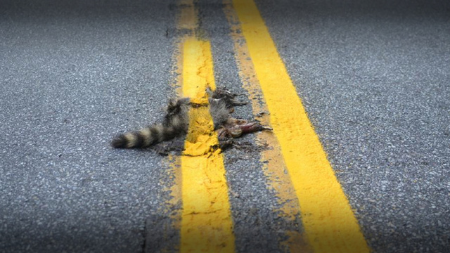 A Road Crew Painted A Stripe Over This Dead Raccoon