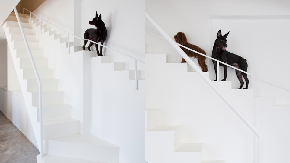 Click here to read Your Dog Needs Its Own Staircase Because You Disgust Him