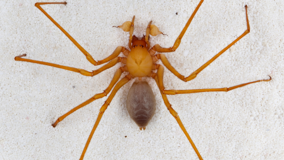 Click here to read Your Daily Dose of Nightmare Fuel: a Newly Discovered Type of Cave Spider. With Claws.