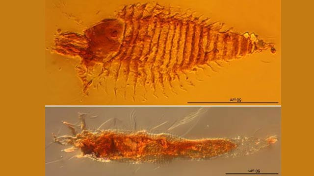Oldest Fossilized Bugs Ever Found Preserved in Amber. Clone Time!