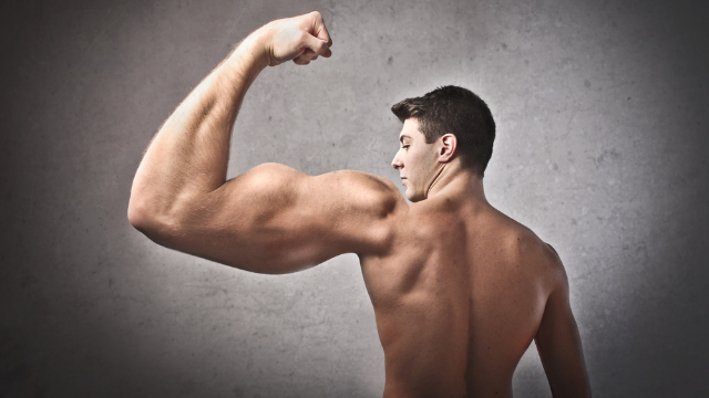 "Click here to read Newly Discovered ""Hulk"" Protein Could Make You a Beefcake Without the Weights"