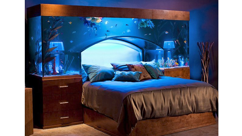 Stunning aquarium bed redefines sleeping with the fishes for Fish tank bedroom ideas
