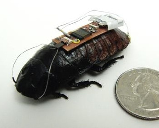 How a Remote-Controlled Cyborg Cockroach Could Save Your Life