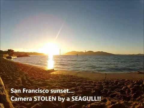Click here to read Seagulls Love Stealing GoPro Cameras and Flying Away