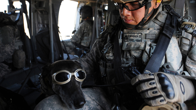 26 Awesome Photos of War Dogs Showing How Badass and Cute They Can Be