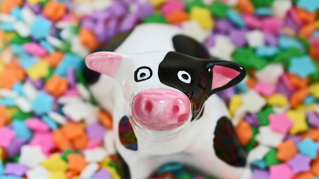 Thanks to the Drought, Cows Are Eating Candy and Cookies Faster Than a Halloween Slumber Party