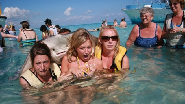 Get Out Of The Water! Stingray photo bomb will scar your soul